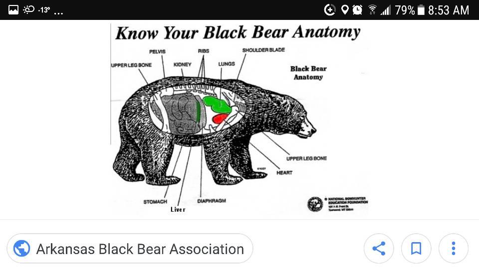 Black Bear Shot Placement Alberta Outdoorsmen Forum