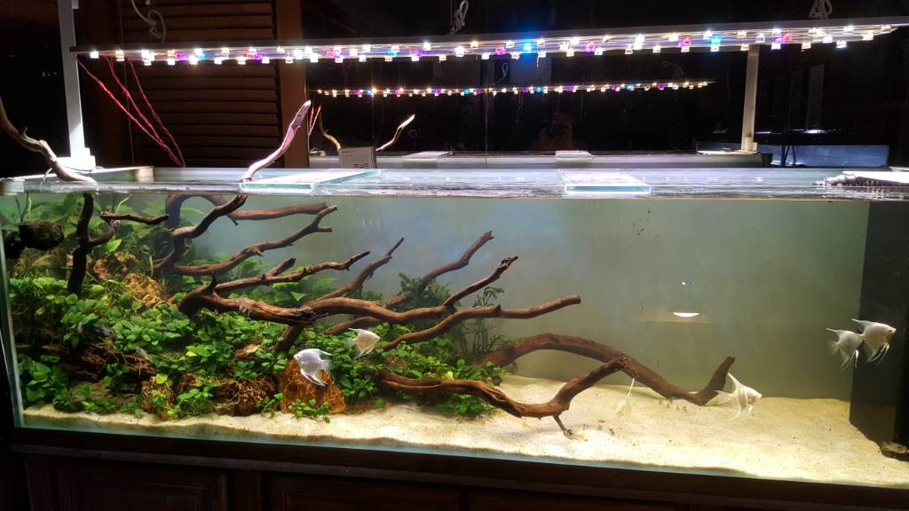Look Of The Tank What Complicates This A Bit For Me Is Some Driftwood That Sticks Up Above Water Line On Left And Overflow Right