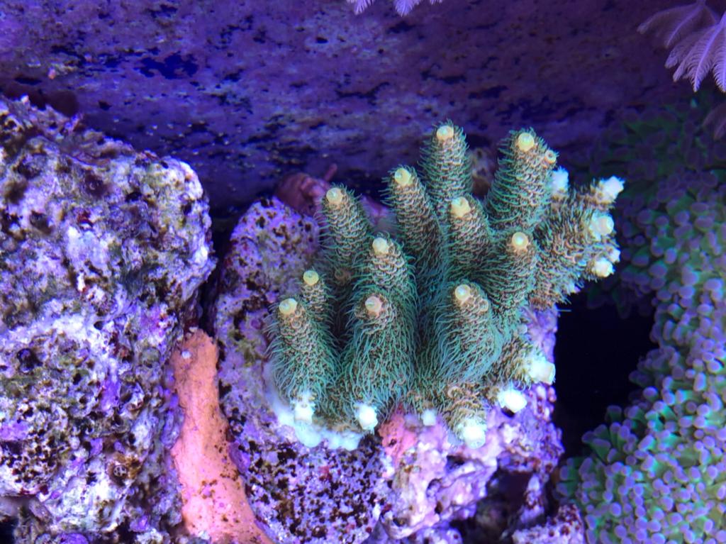 Plafoniere Gnc Bluray : Il mio reef mesi gnc bluray archivio bastards forum