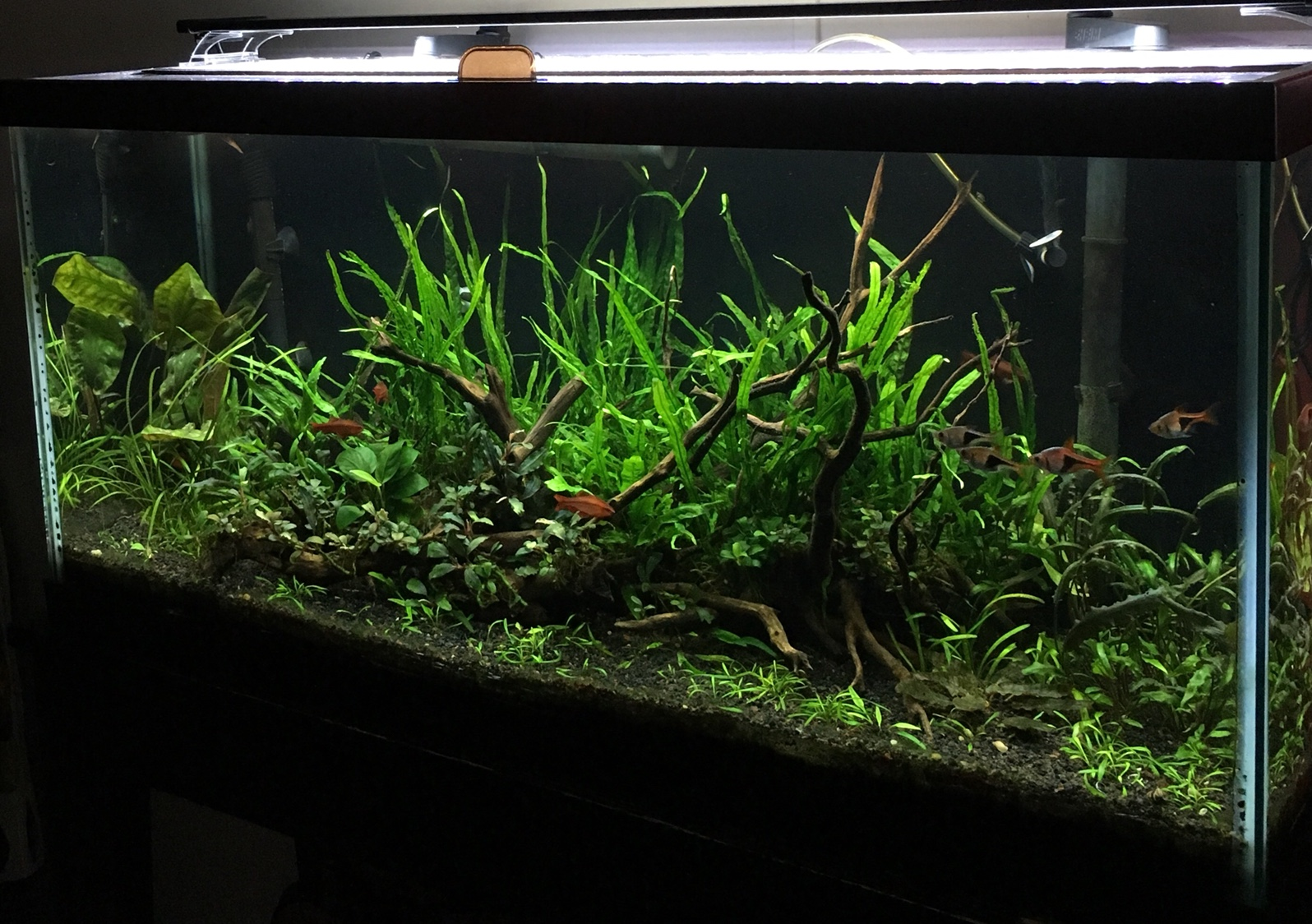 freshwater1 s 30 gallon low light tank the planted tank forum