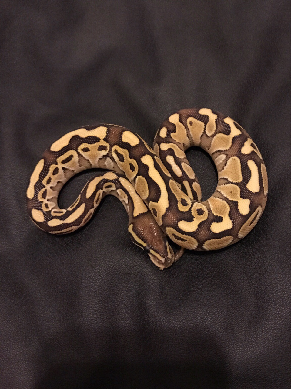 Good reptile shops/breeders in the Midlands? - Reptile Forums