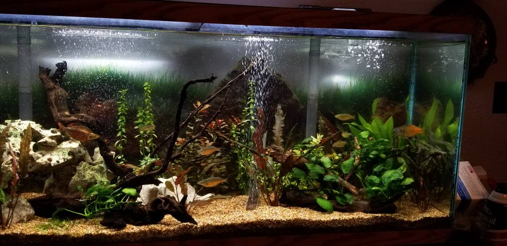 Root tab placement - The Planted Tank Forum