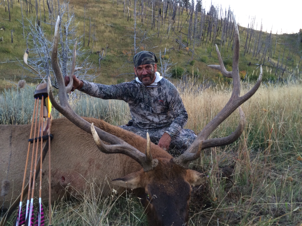 ARROW WRAPS BULL ELK BUST AND PRINTS ARCHERY HUNTING BOW HUNTING elk hunting