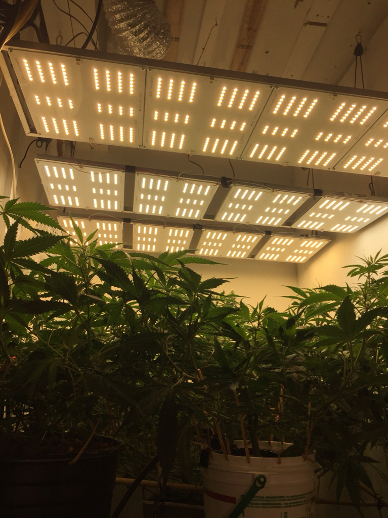 What grow light for a 4x4 tent? | Grasscity Forums - The #1
