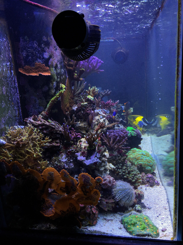 90 gallon | AquaScaping World Forum
