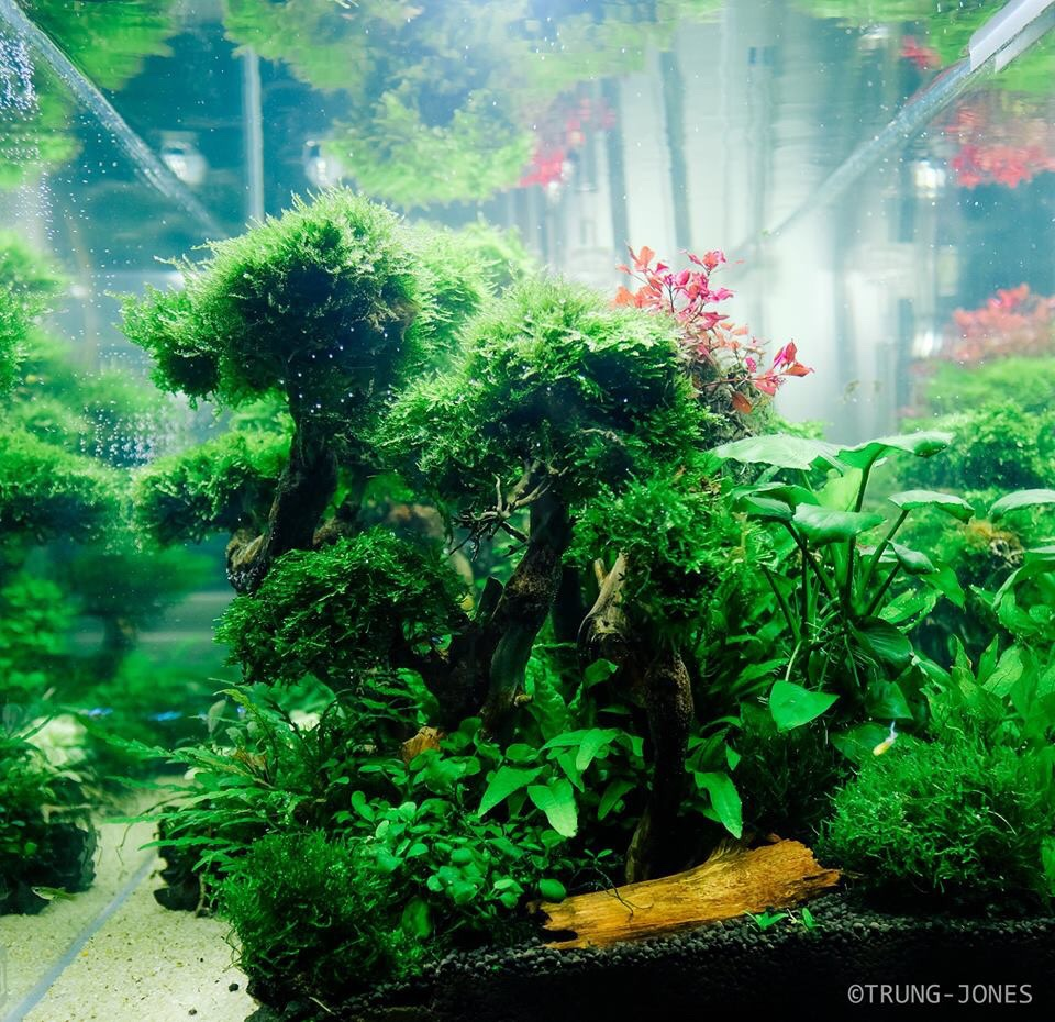 Forest Aquascape: My Little Forest- 5 Months Update
