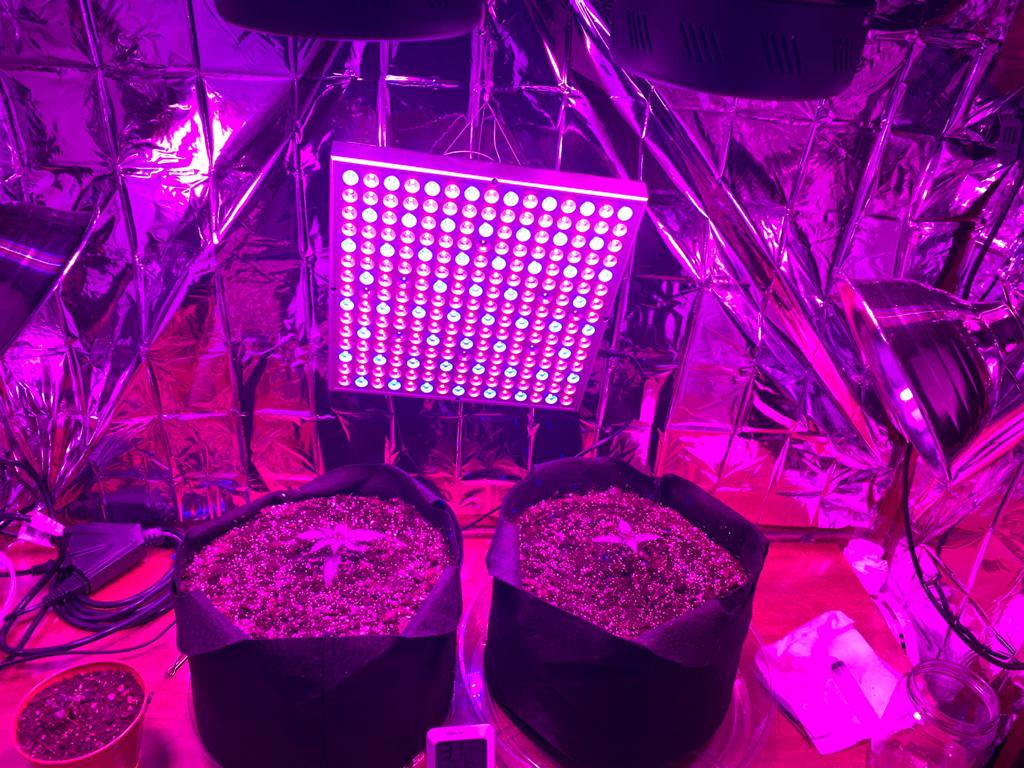 Small micro grow | Grasscity Forums - The #1 Marijuana