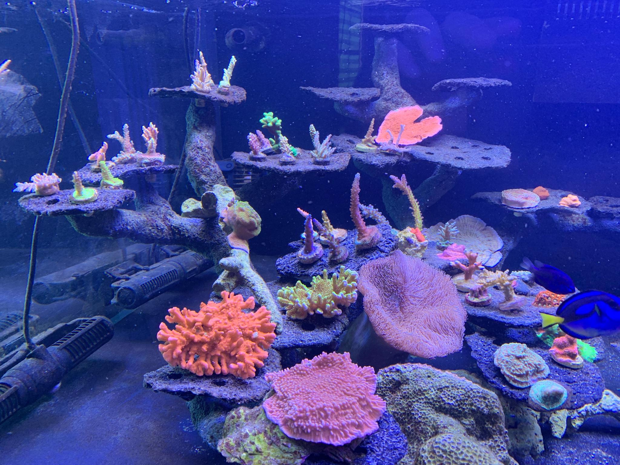 Aquascape Ideas Bonsai Reef Aquascape