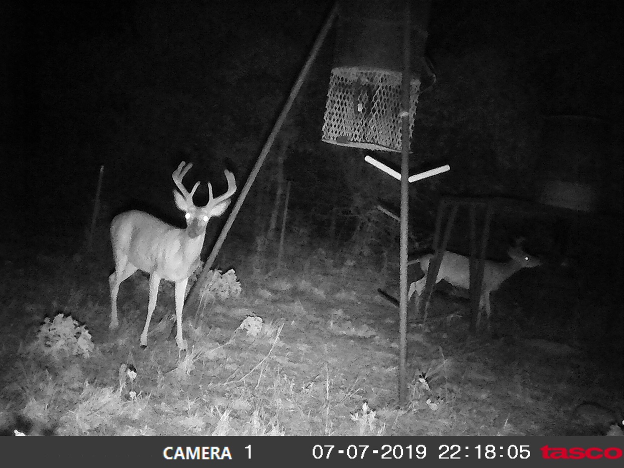 2019/2020 bosque county - TexasBowhunter com Community