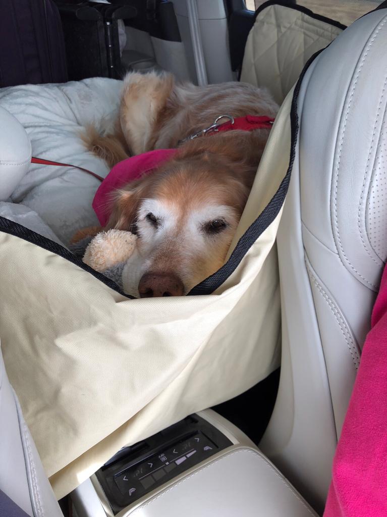 07- Premium Travel Pet Dog Hammock For Volvo C30 R DESIGN