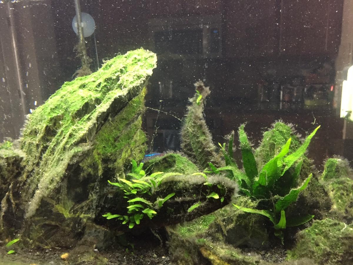 String Algae - Help | AquaScaping World Forum