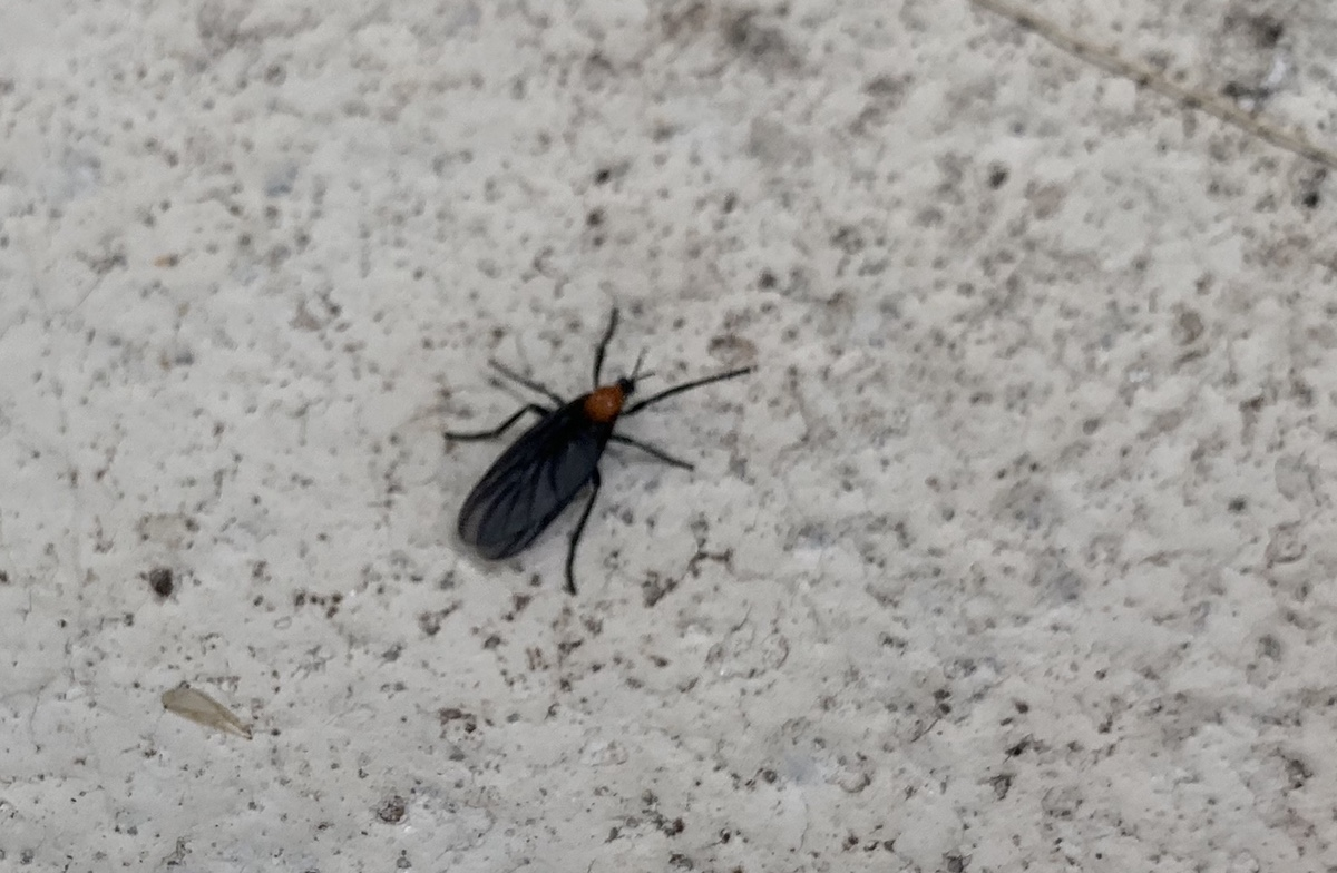 They're back! Love Bugs!