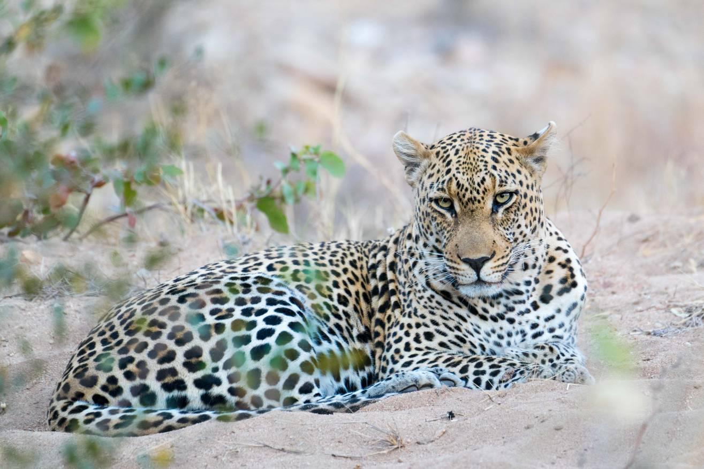 Un lindo gatito en Fauna y flora2f06810db61bfbcc75575a71585daee8