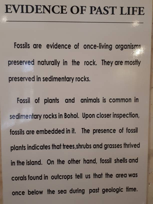 3cc3c3555926ecde8f6dd7b079eadcfc - Evidence of Past Life in Bohol - History